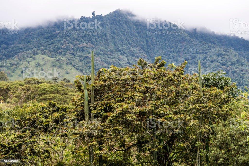 nambillo rain forest in Ecuador stock photo