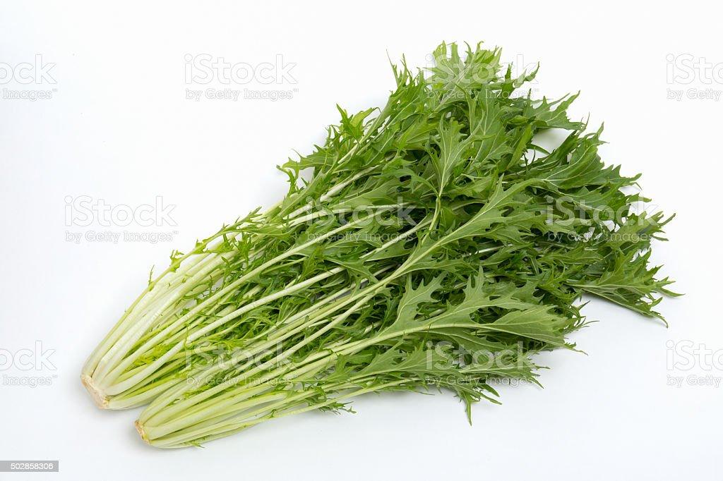 Named mizuna of Japan of vegetables. stock photo
