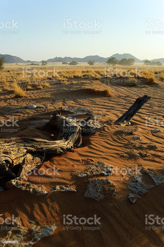 Namib am Morgen II stock photo
