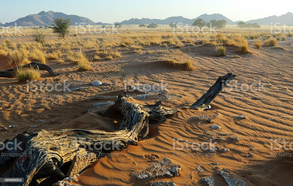 Namib am Morgen stock photo