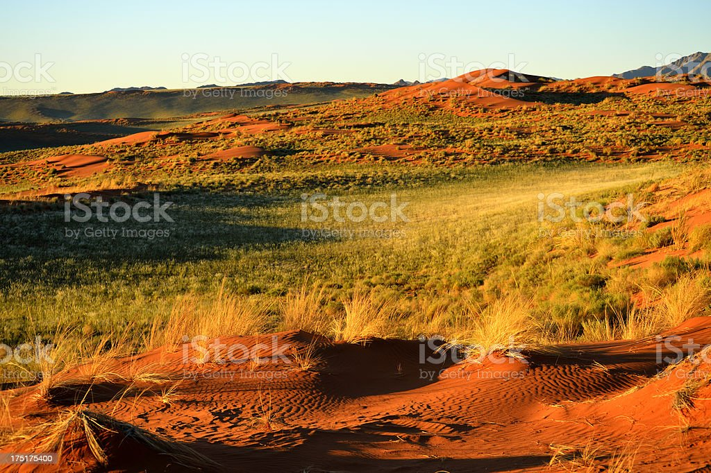 Namib Desert colored in green royalty-free stock photo