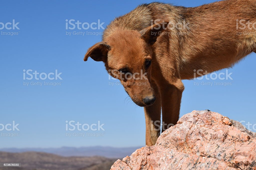 Namiban Dog stock photo