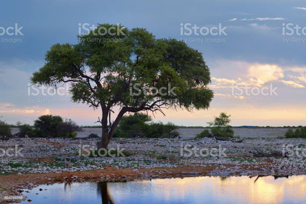 Namibia, Africa, savannah at night stock photo