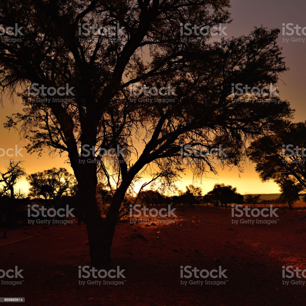Namibia, Africa, silhouette of tree stock photo