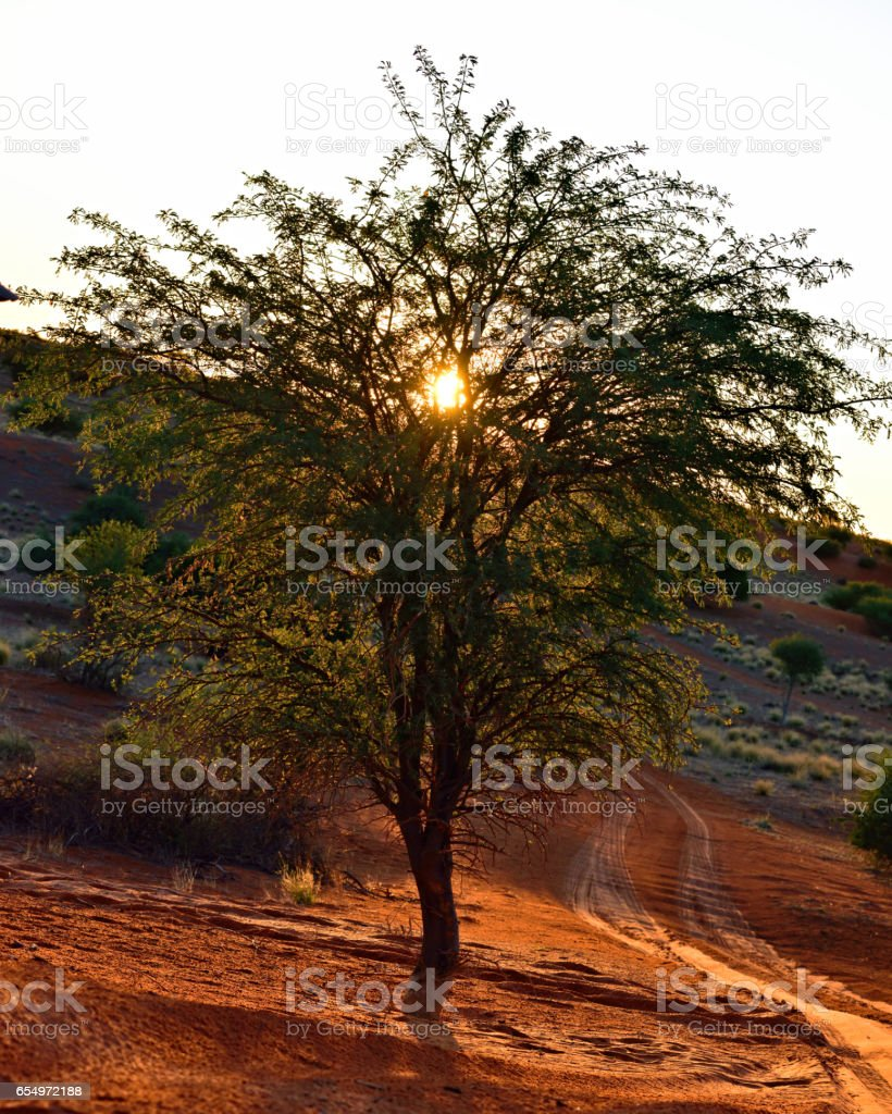 Namibia, Africa, tree against sunset stock photo