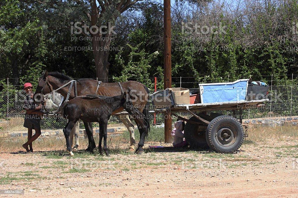 Namibia: Boy with horse-drawn wagon stock photo