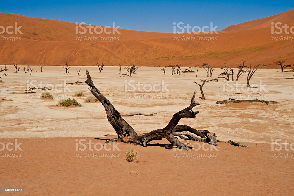 Namibia Desert Namib Dead Vlei royalty-free stock photo