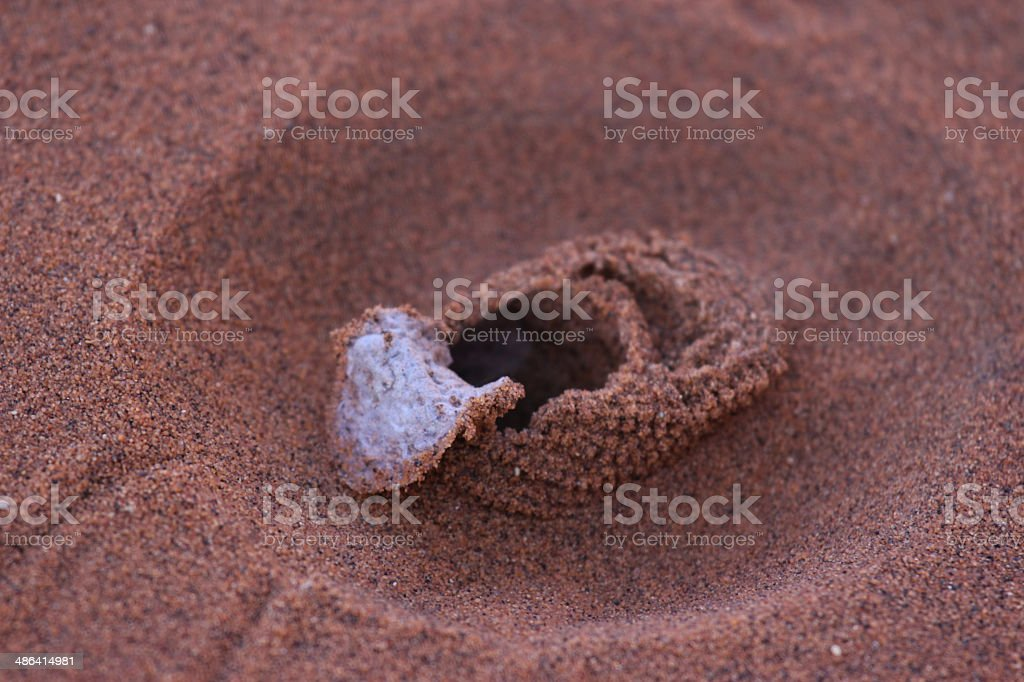 Namibia: Entrance to a Sand Dune Spider Burrow stock photo