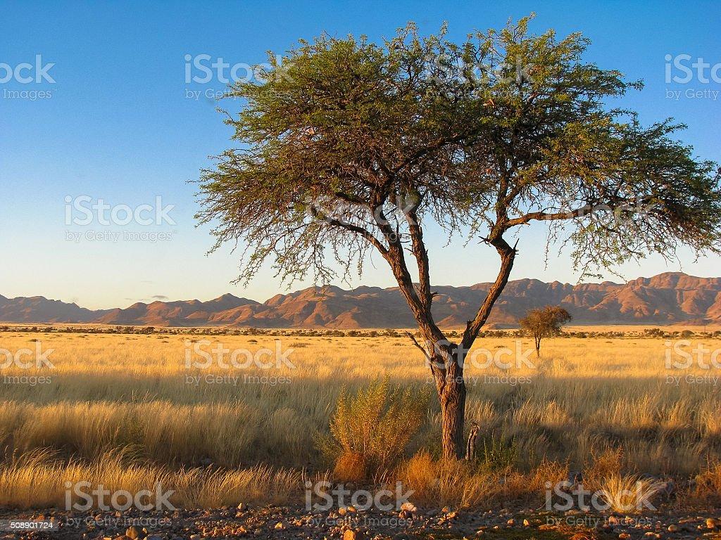 Namibia namib mountains and tree stock photo