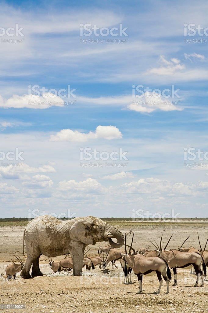 Namibia Wildlife royalty-free stock photo