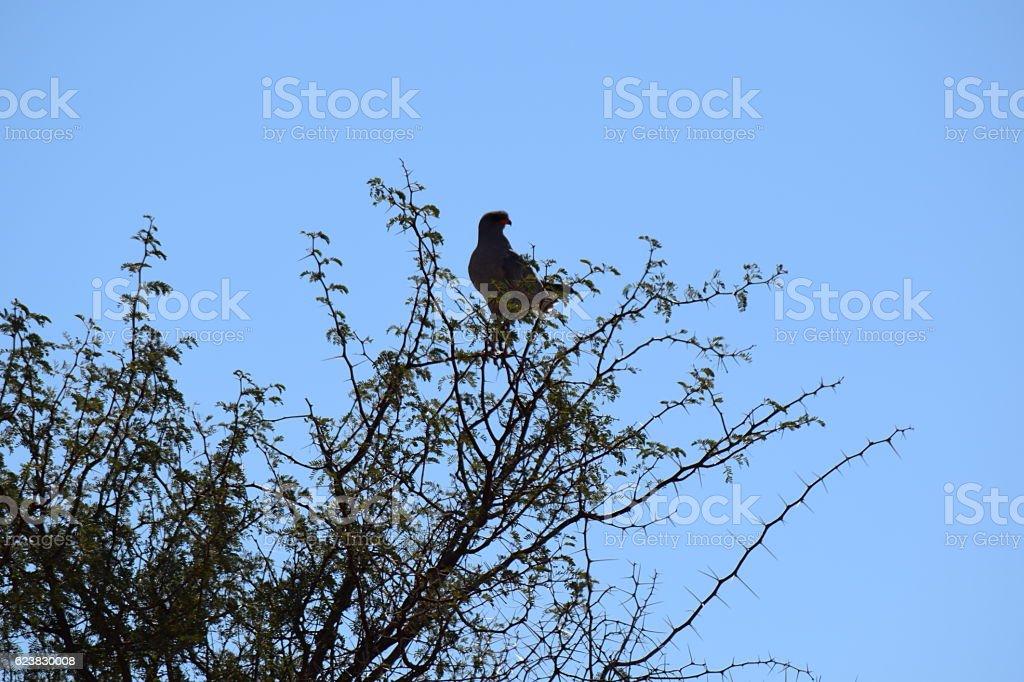 Namibian Bird stock photo