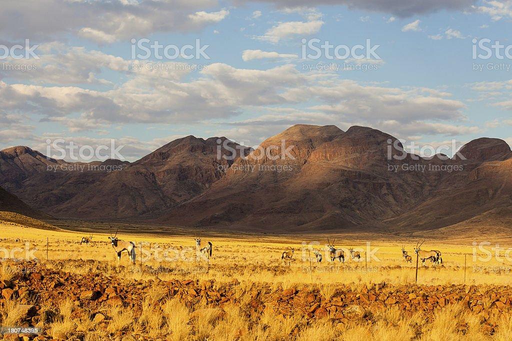 namibian landscape with gemsbok royalty-free stock photo