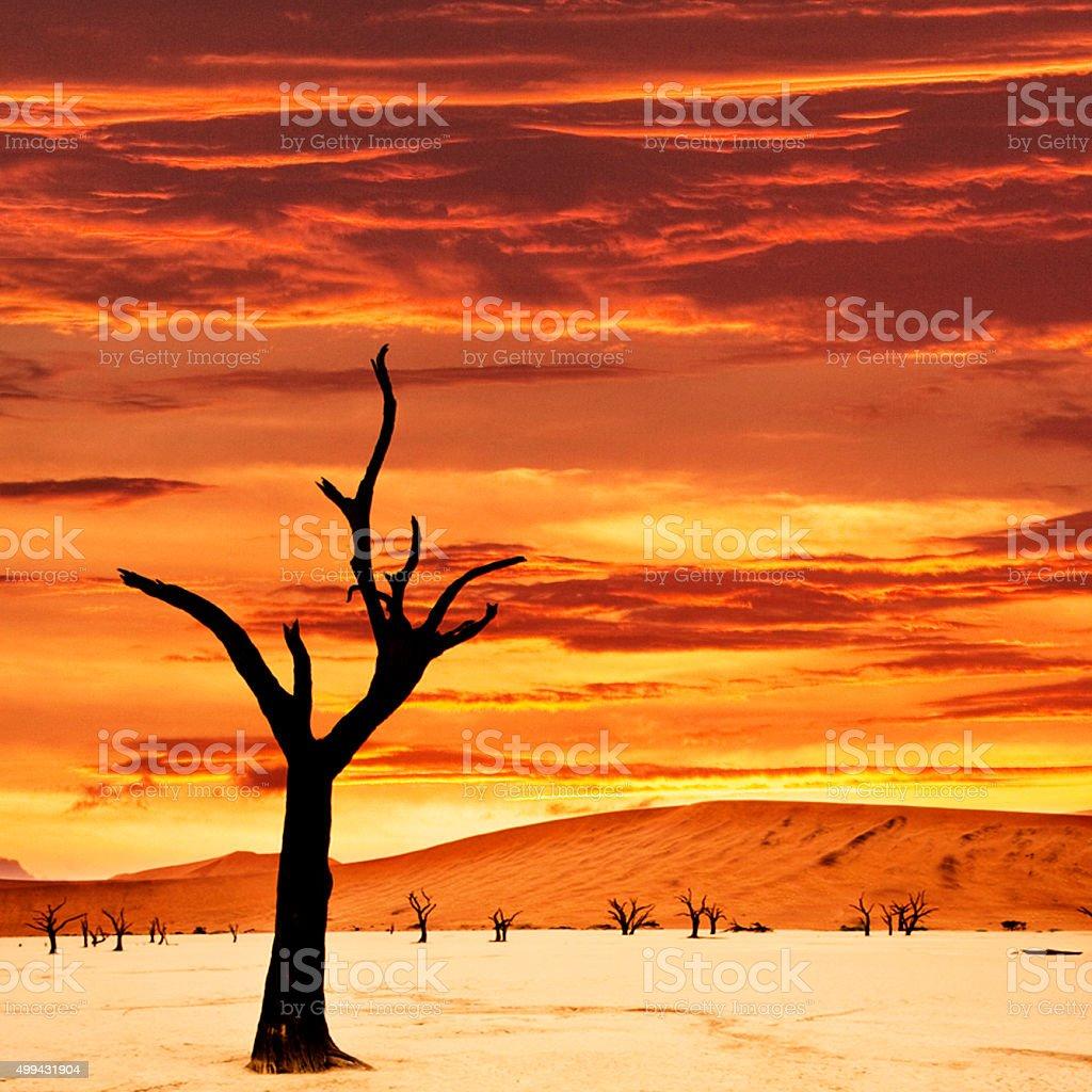 Namibian sunset stock photo