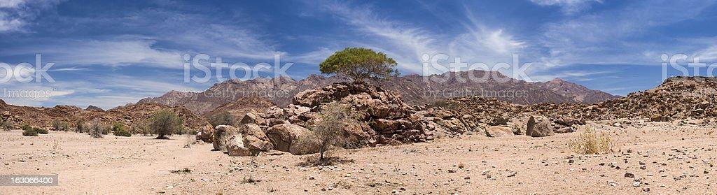 Namibian Tree on rocks 1 stock photo