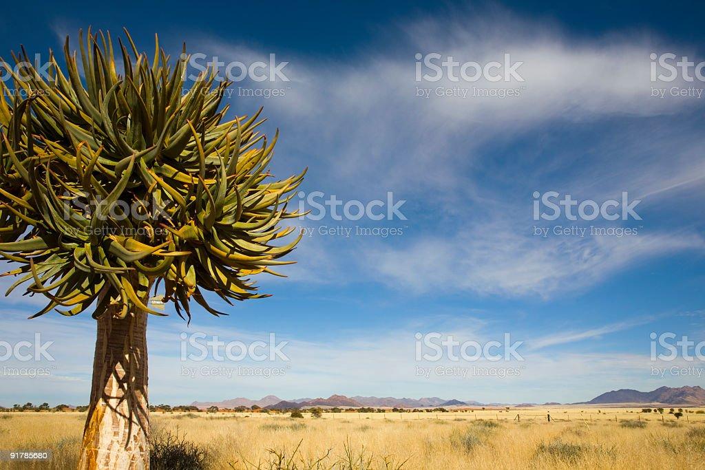 Namibrand royalty-free stock photo