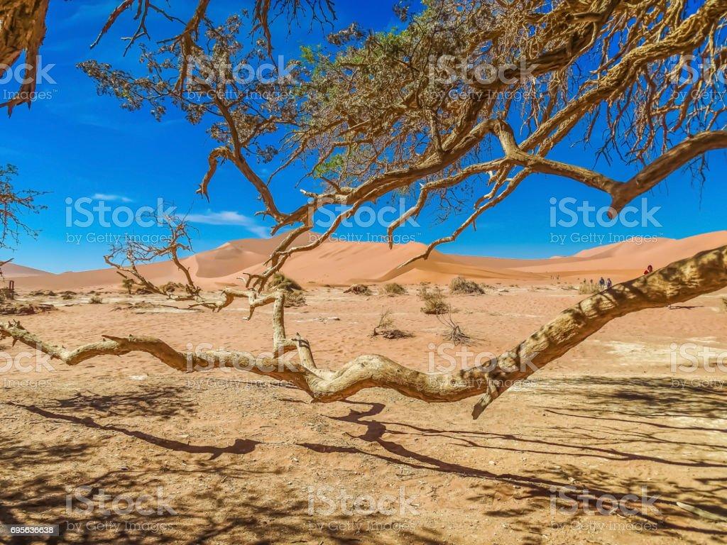 Namibtree stock photo