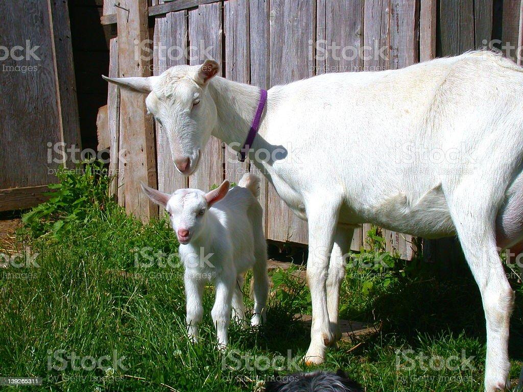 Nanny and Kid stock photo