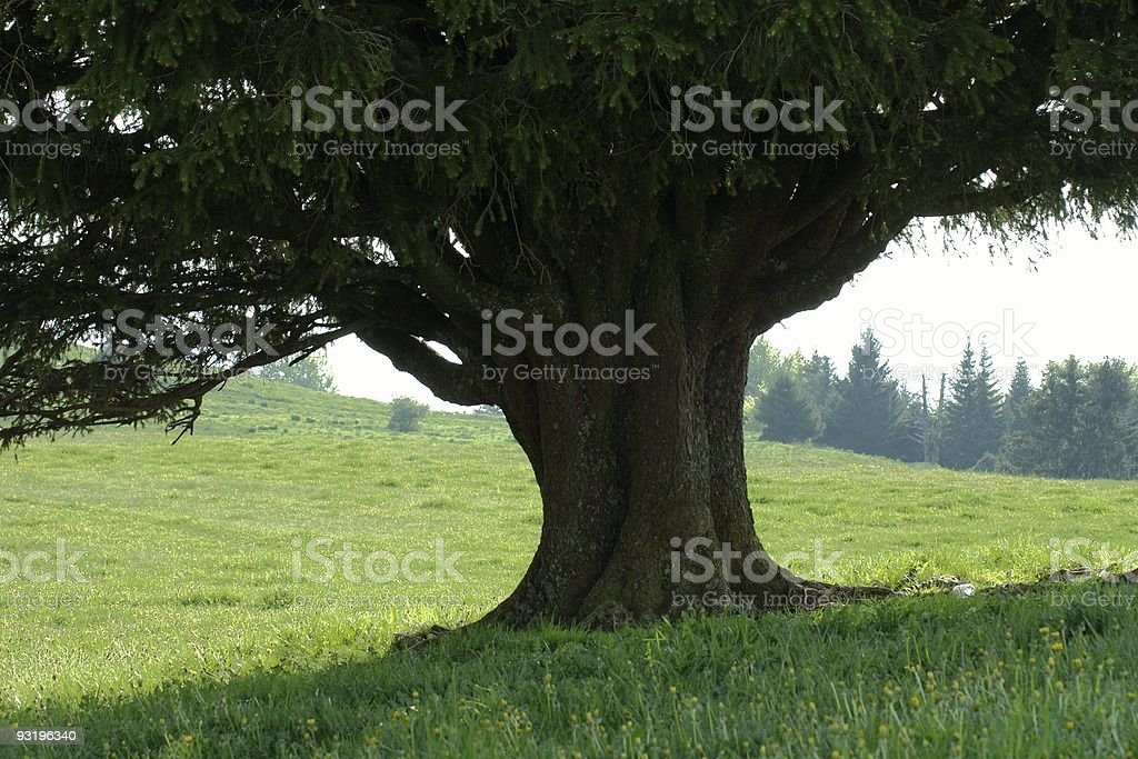 Nap in the shadow ? royalty-free stock photo