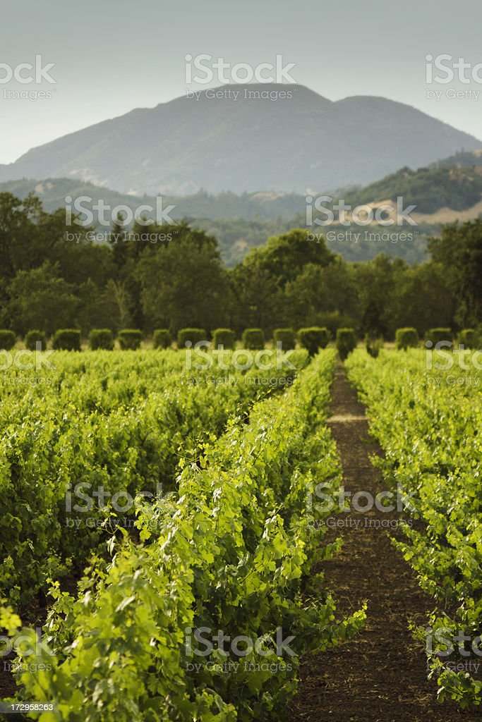 Napa Afternoon royalty-free stock photo