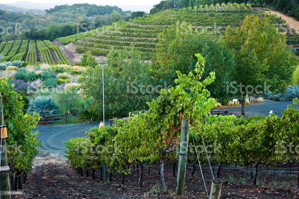 Napa Sonoma California Vineyard royalty-free stock photo