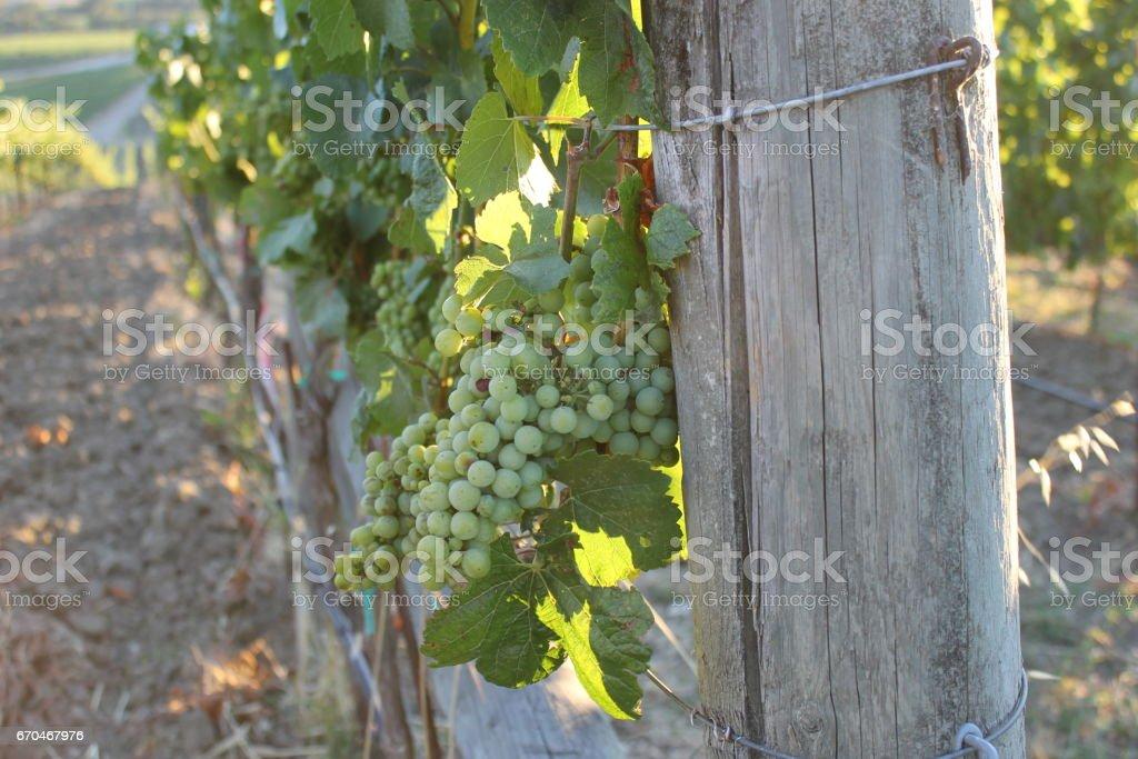 Napa Valley, California stock photo