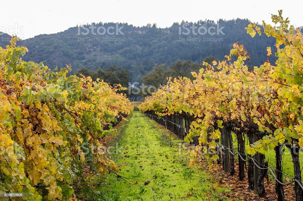 Napa Valley California Vineyard landscape stock photo