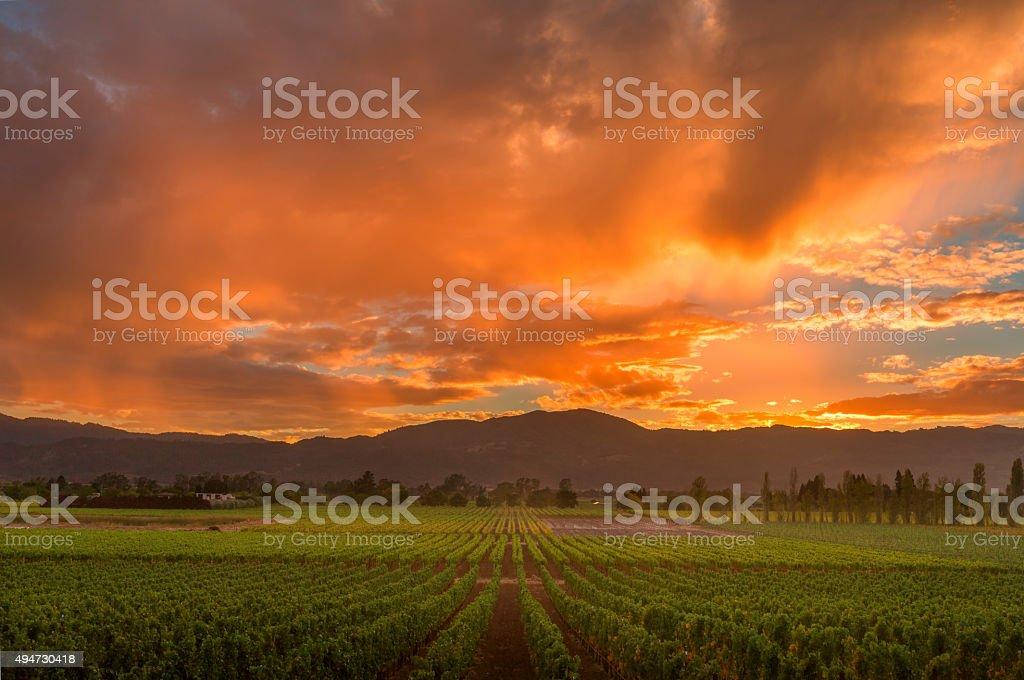 Napa Valley California Vineyard landscape Sunset stock photo