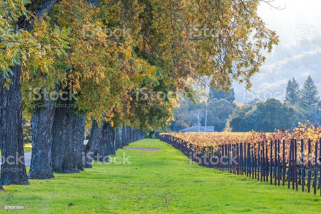 Napa Valley California Vineyard landscape, USA stock photo