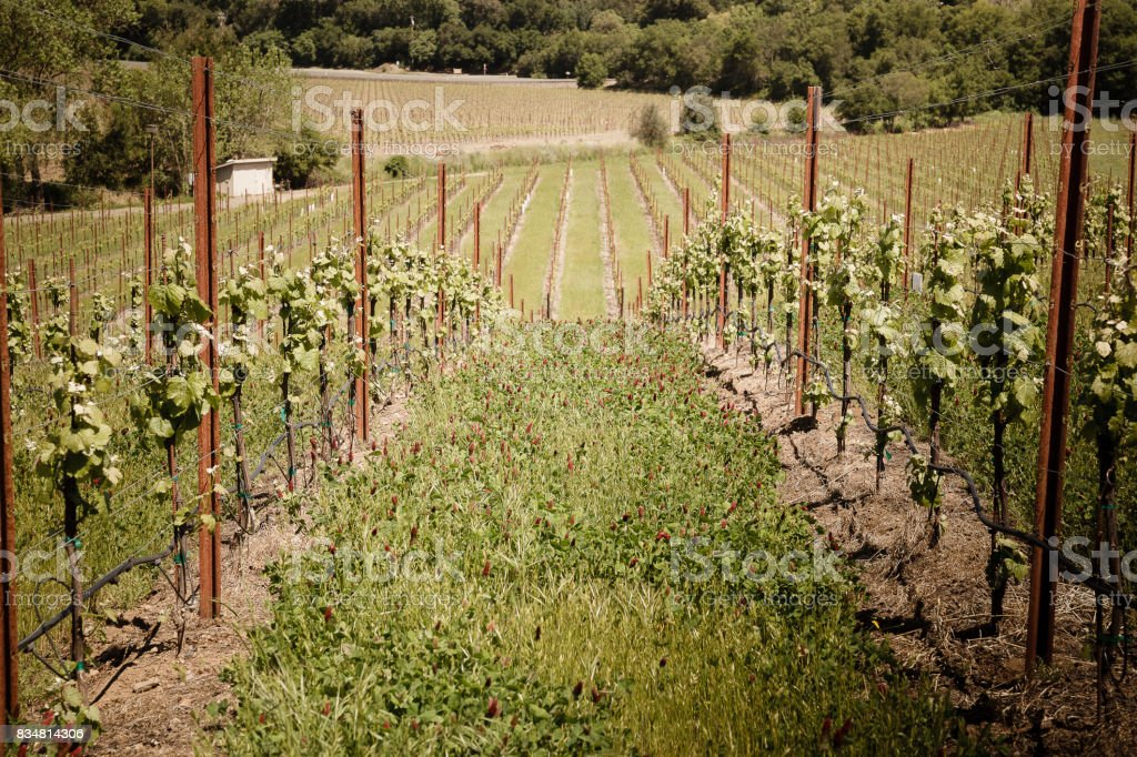 Napa Valley California Wine Country Vineyard Field stock photo