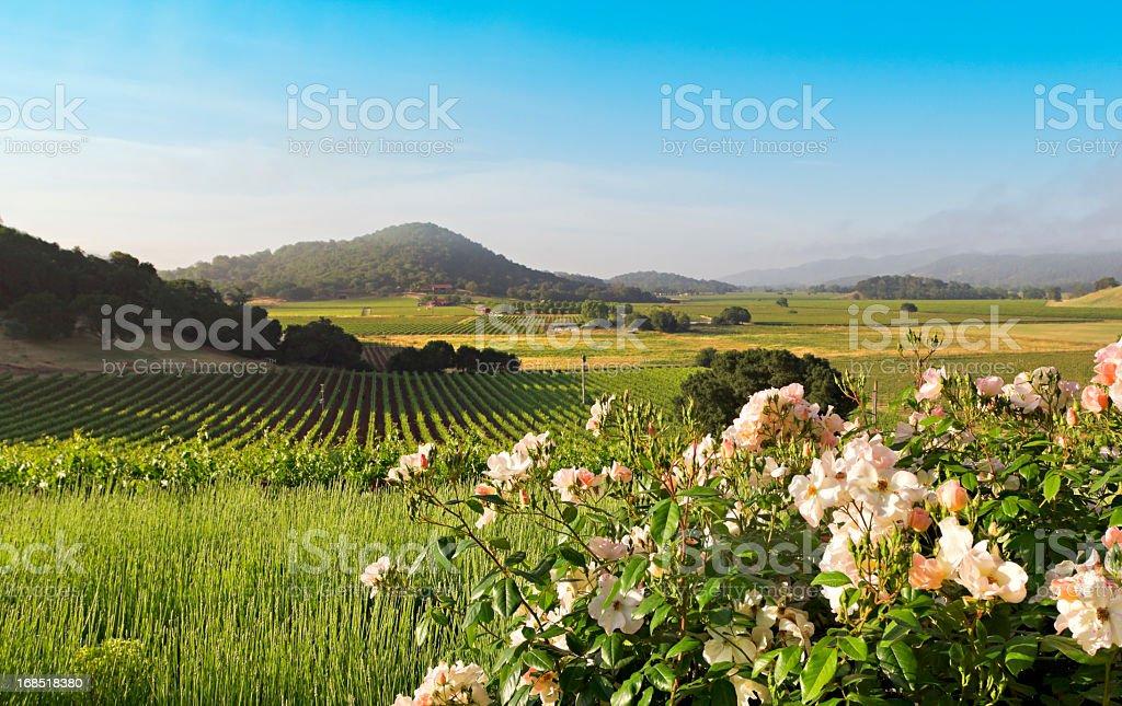 Napa Valley landscape in spring stock photo