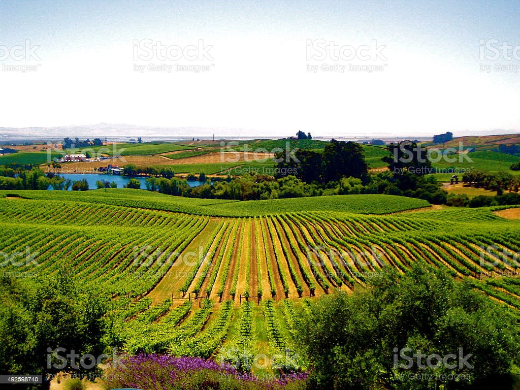 Napa Valley Landscape stock photo
