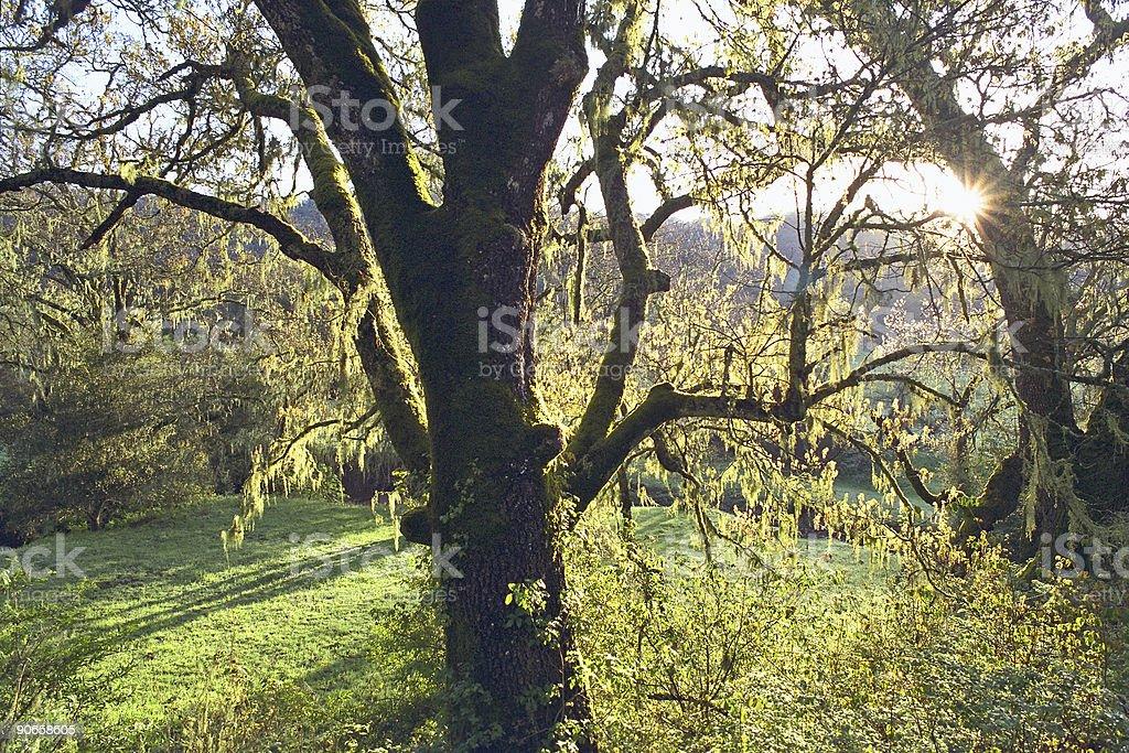 Napa Valley Morning royalty-free stock photo
