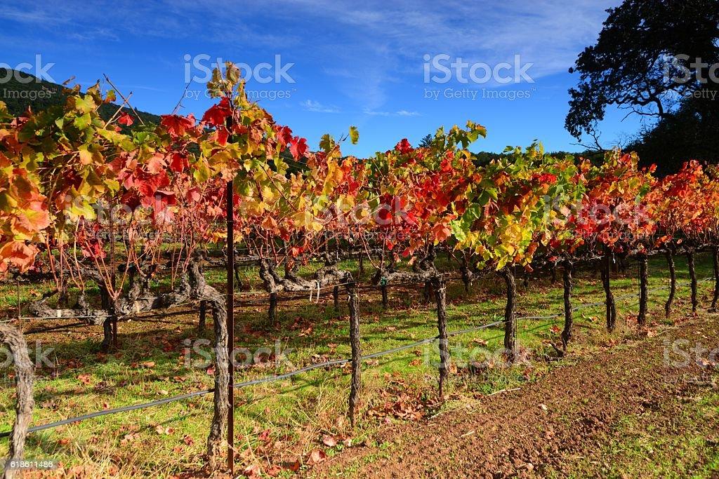 Napa Valley stock photo