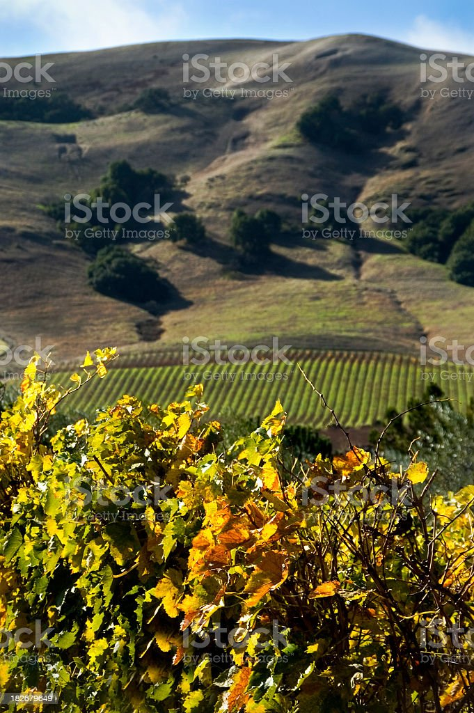 napa valley view royalty-free stock photo