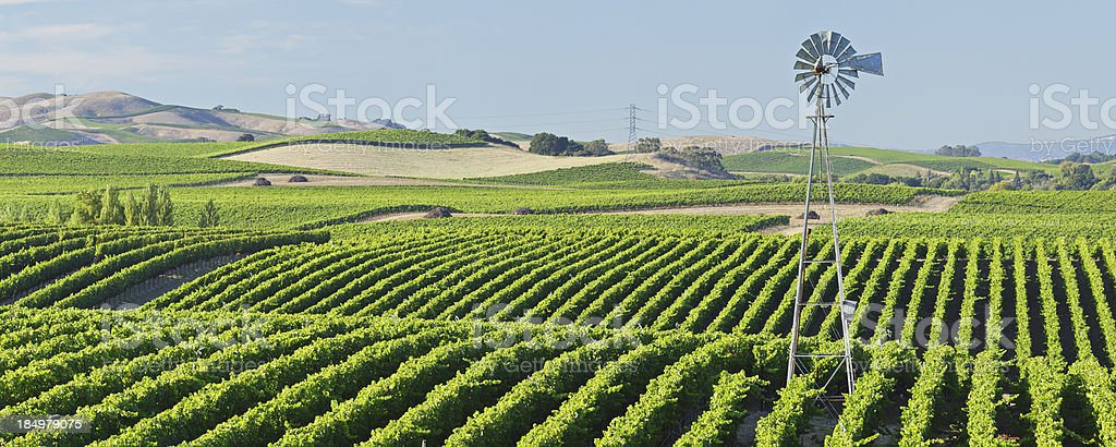 Napa Valley Vineyard stock photo