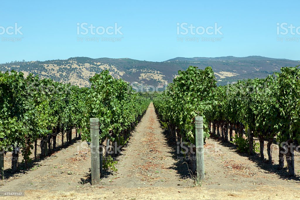 Napa Valley Vineyard royalty-free stock photo