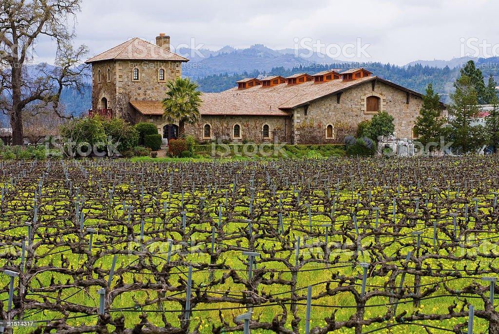 Napa Valley vineyard stock photo