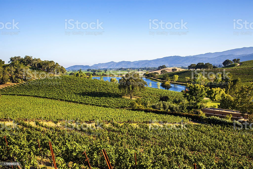 Napa Valley vineyards and pond stock photo
