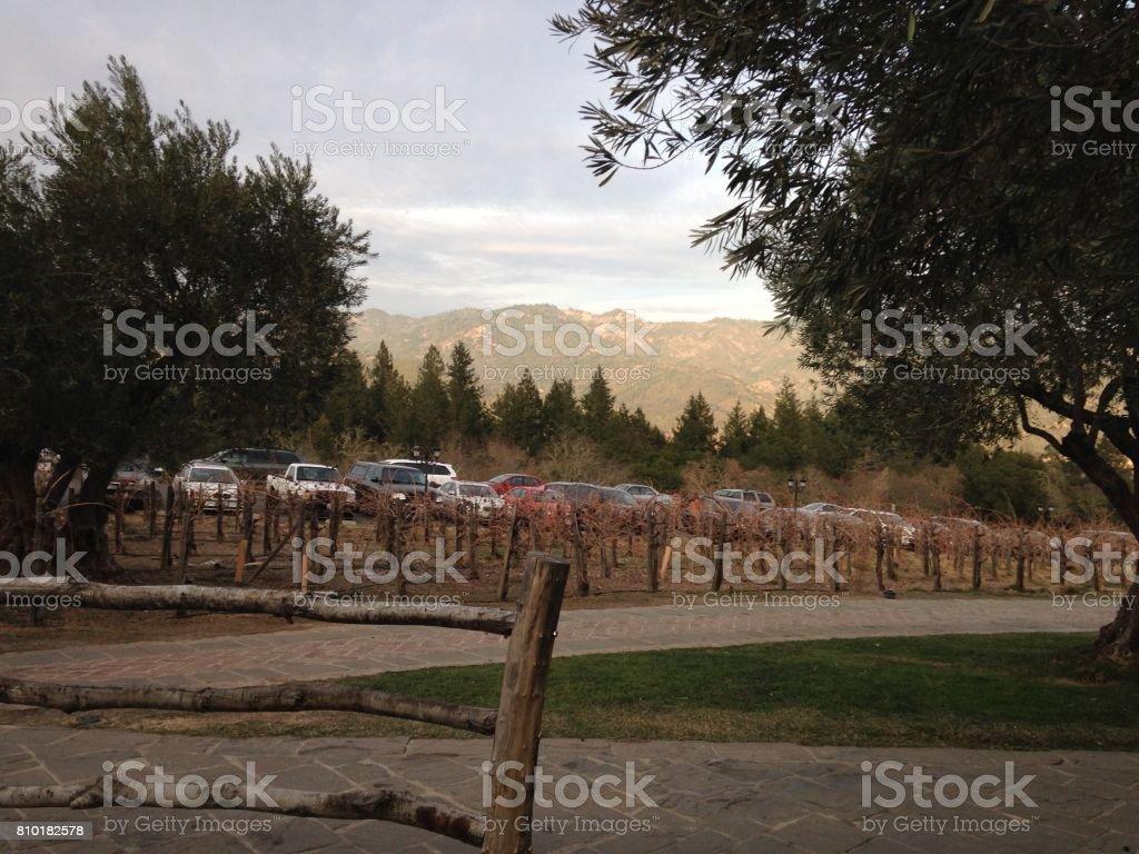 Napa Valley Wine Country stock photo