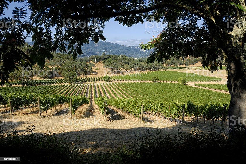 Napa Valley Winery royalty-free stock photo