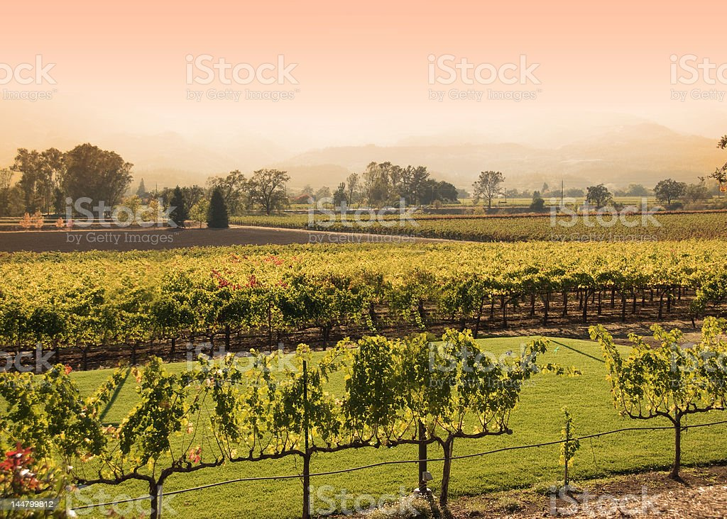 Napa Vineyard sunset royalty-free stock photo