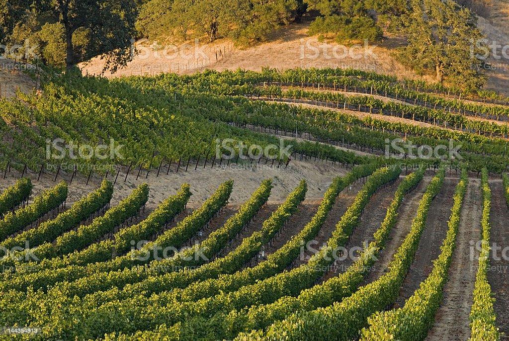 napa wine country royalty-free stock photo