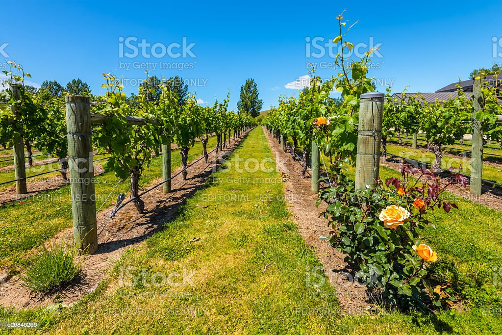 Napier New Zealand stock photo