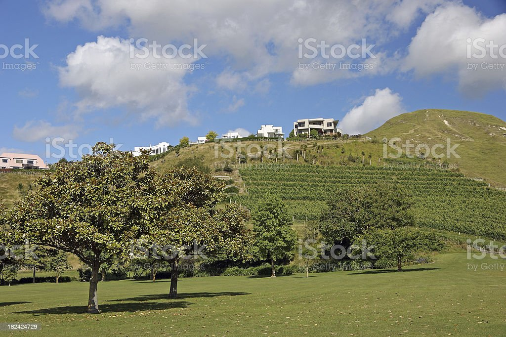 Napier New Zealand Wine Vineyard stock photo