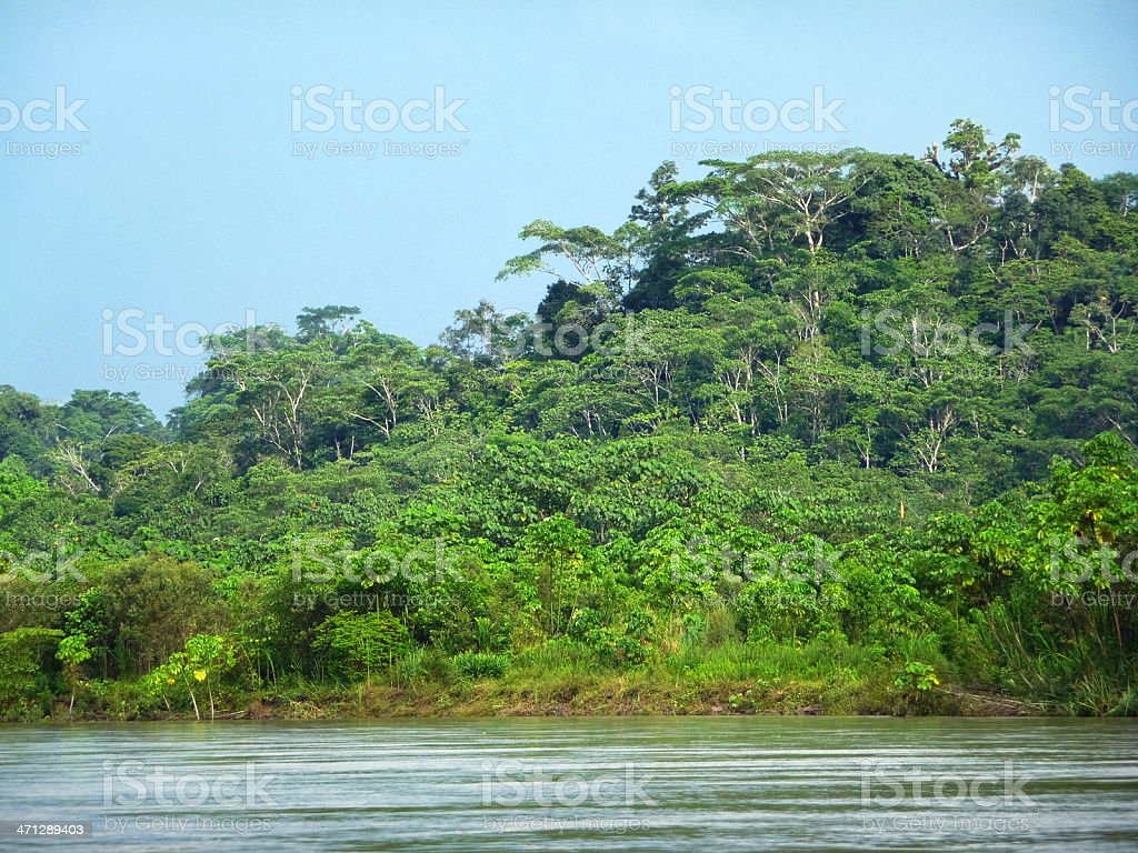 Napo River stock photo