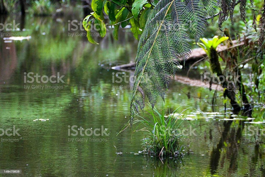 Napo River, rainy season stock photo