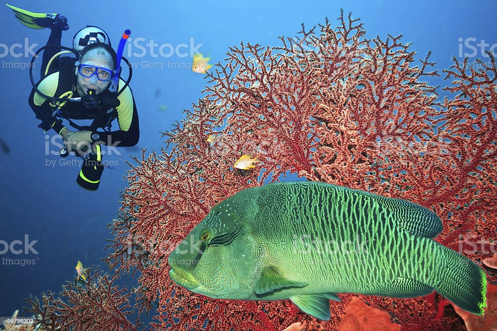 Napoleon and diver stock photo