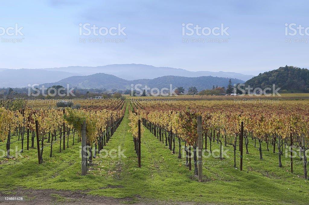 Nappa Valley Vineyard royalty-free stock photo