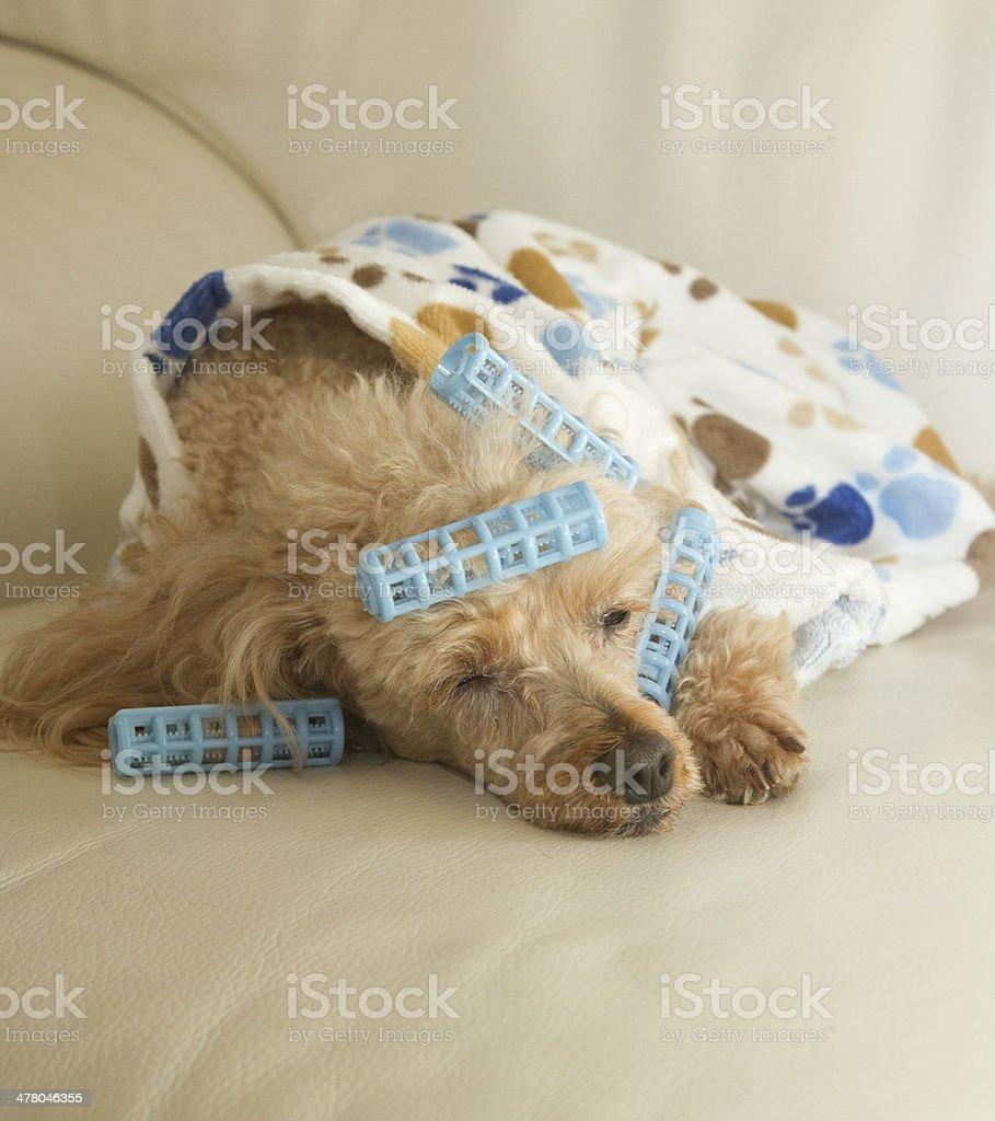 Napping on Sofa royalty-free stock photo