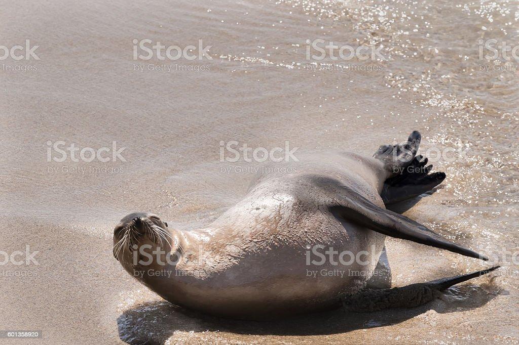 Napping Sea Lion stock photo